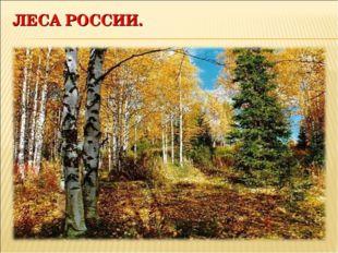 ЛЕСА РОССИИ.