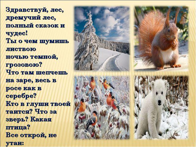Здравствуй, лес, дремучий лес, полный сказок и чудес! Ты о чем шумишь листвою...