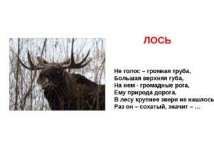 Не голос – громкая труба, Большая верхняя губа, На нем - громадные рога, Ему