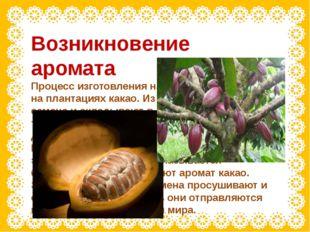Возникновение аромата Процесс изготовления начинается в тропиках, на плантаци