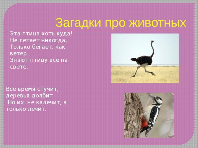 Загадки про животных Эта птица хоть куда! Не летает никогда, Только бегает,...