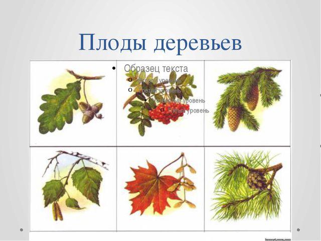 Плоды деревьев