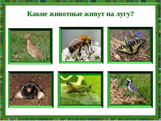 Какие животные живут на лугу?