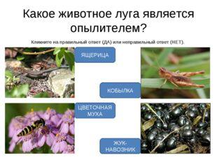 Какое животное луга является опылителем? Кликните на правильный ответ (ДА) ил