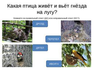 Какая птица живёт и вьёт гнёзда на лугу? Кликните на правильный ответ (ДА) ил