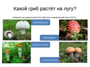 Какой гриб растёт на лугу? Кликните на правильный ответ (ДА) или неправильный