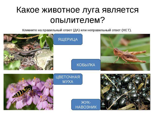Какое животное луга является опылителем? Кликните на правильный ответ (ДА) ил...