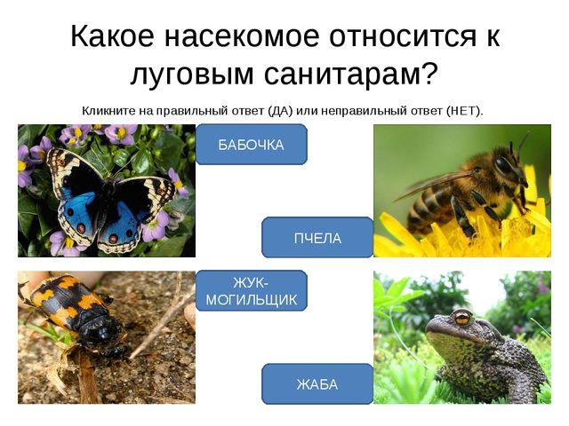 Какое насекомое относится к луговым санитарам? Кликните на правильный ответ (...