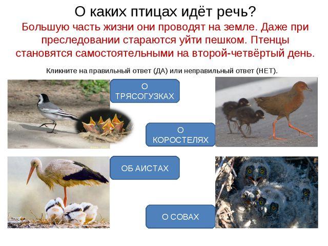 О каких птицах идёт речь? Большую часть жизни они проводят на земле. Даже при...