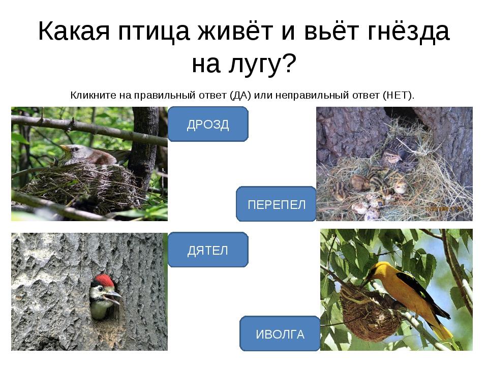 Какая птица живёт и вьёт гнёзда на лугу? Кликните на правильный ответ (ДА) ил...