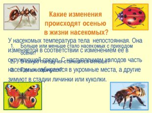 Какие изменения происходят осенью в жизни насекомых? Больше или меньше стало