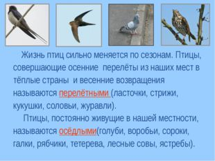 Жизнь птиц сильно меняется по сезонам. Птицы, совершающие осенние перелёты и