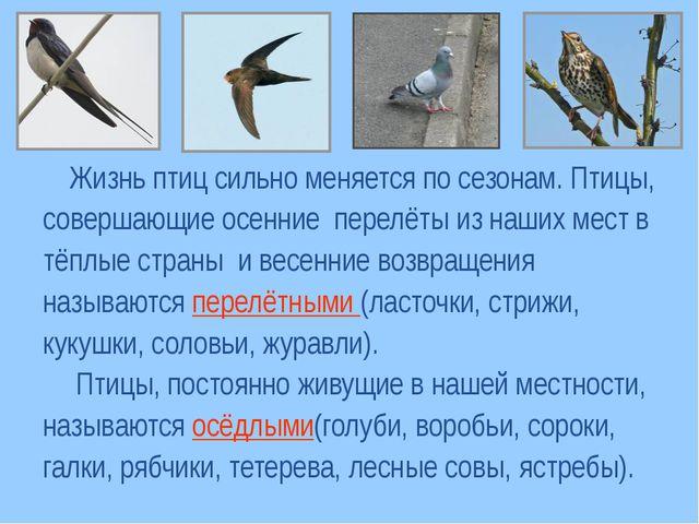 Жизнь птиц сильно меняется по сезонам. Птицы, совершающие осенние перелёты и...