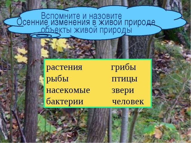 растения грибы рыбы птицы насекомые звери бактерии человек Осенние изменения...