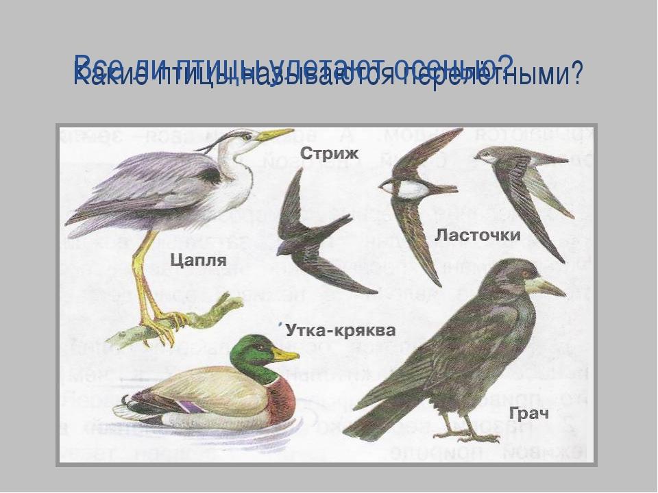 Какие птицы называются перелётными? Все ли птицы улетают осенью?