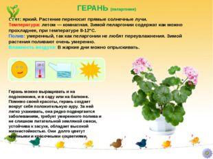 ГЕРАНЬ (пеларгония) Герань можно выращивать и на подоконнике, и в саду или на