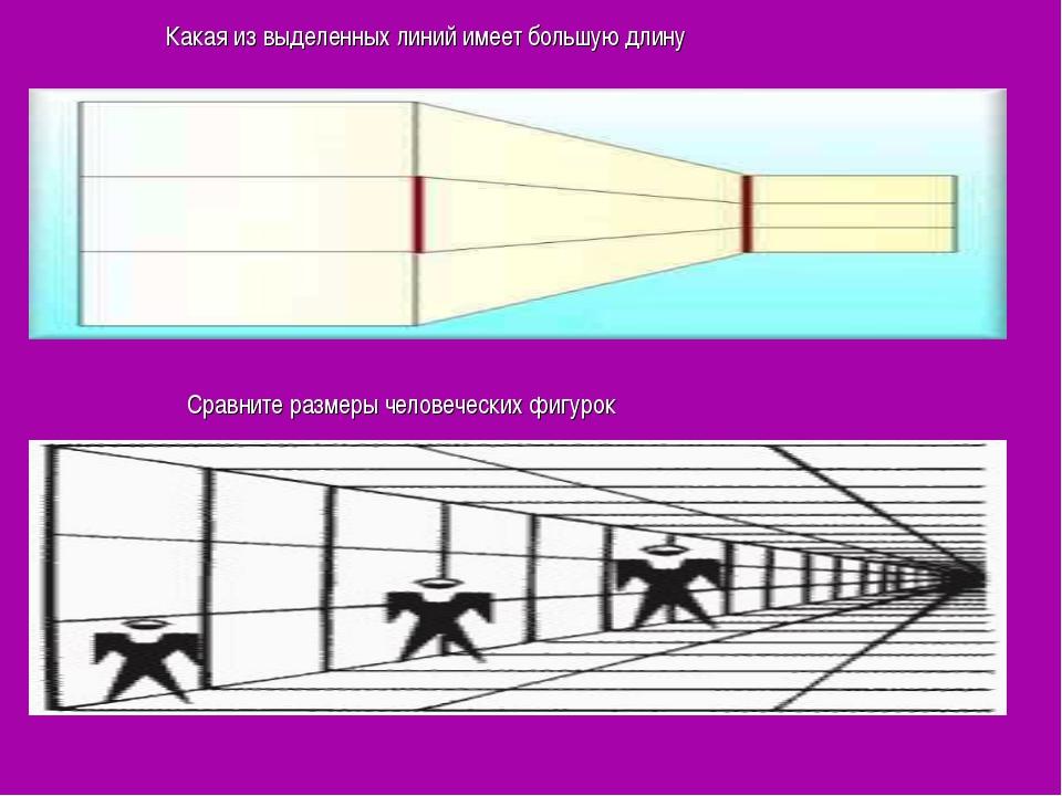 Какая из выделенных линий имеет большую длину Сравните размеры человеческих...