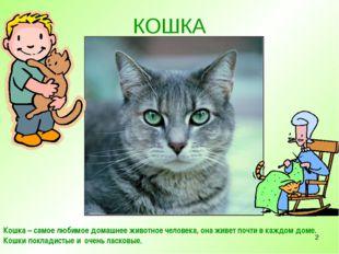 * КОШКА Кошка – самое любимое домашнее животное человека, она живет почти в к
