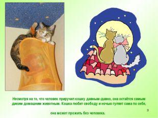 * Несмотря на то, что человек приручил кошку давным-давно, она остаётся самым