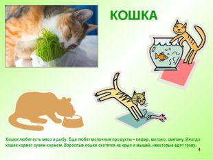 * КОШКА Кошки любят есть мясо и рыбу. Еще любят молочные продукты – кефир, мо