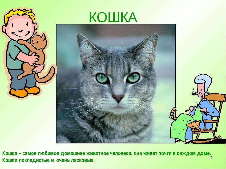 * КОШКА Кошка – самое любимое домашнее животное человека, она живет почти в к...