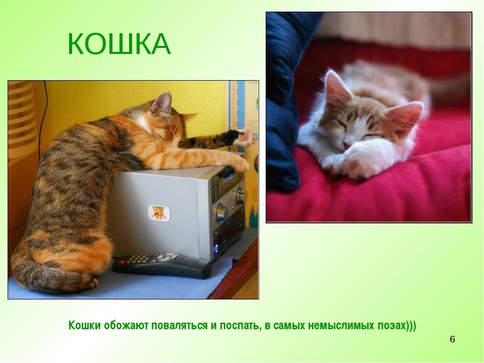 * Кошки обожают поваляться и поспать, в самых немыслимых позах))) КОШКА