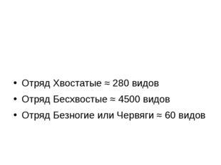 Земноводные или Амфибии Отряд Хвостатые ≈ 280 видов Отряд Бесхвостые ≈ 4500 в