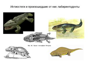 Ихтиостеги и произошедшие от них лабиринтодонты
