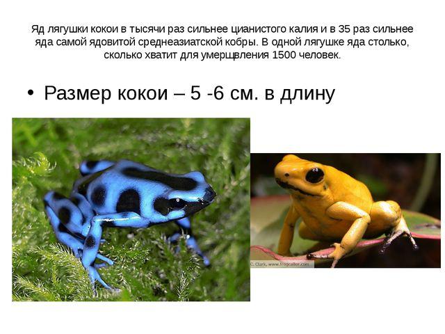 Яд лягушки кокои в тысячи раз сильнее цианистого калия и в 35 раз сильнее яда...