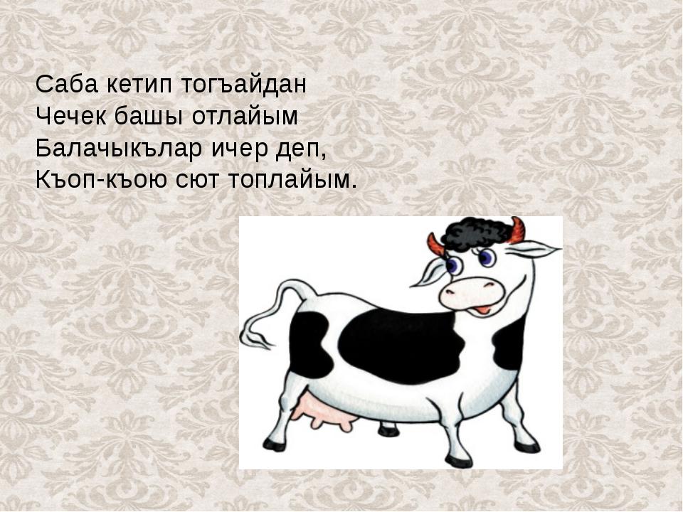 Саба кетип тогъайдан Чечек башы отлайым Балачыкълар ичер деп, Къоп-къою сют...
