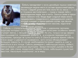 соболь принадлежит к числу ценнейших пушных животных, занимающих видное мест