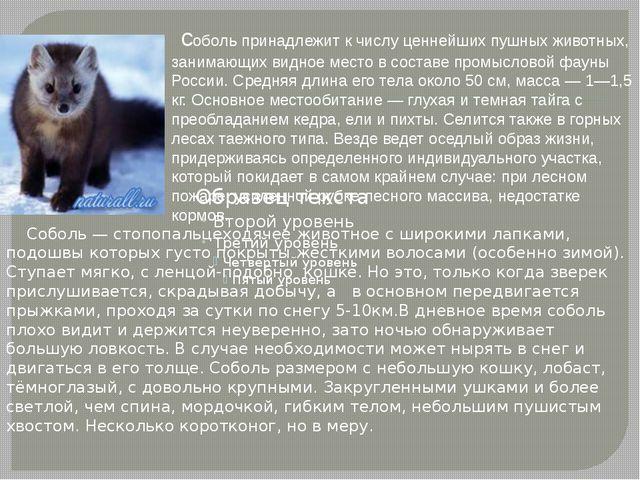соболь принадлежит к числу ценнейших пушных животных, занимающих видное мест...