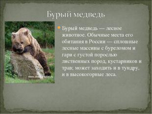 Бурый медведь— лесное животное. Обычные места его обитания в России— сплошн