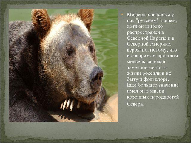 """Медведь считается у нас """"русским"""" зверем, хотя он широко распространен в Сев..."""