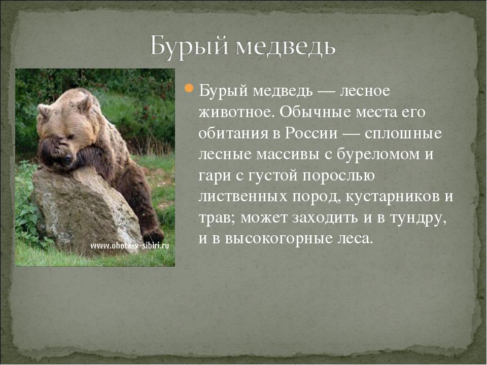 Бурый медведь— лесное животное. Обычные места его обитания в России— сплошн...