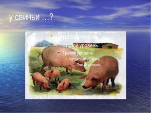 у свиньи …?