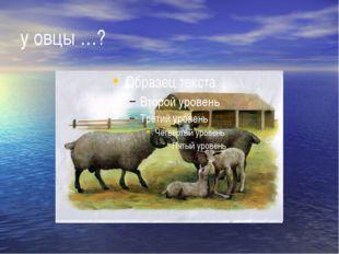 у овцы …?