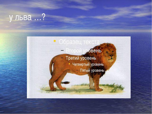у льва …?