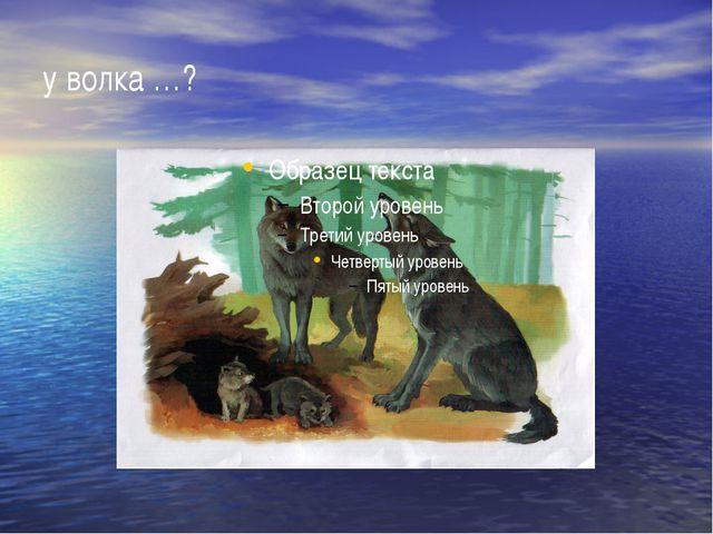 у волка …?