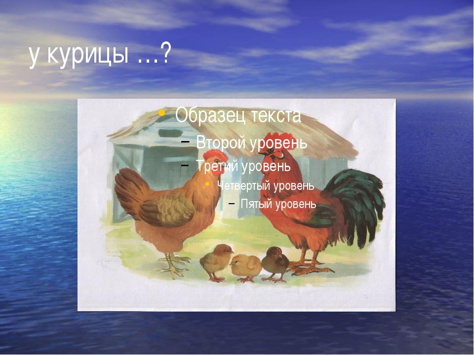 у курицы …?