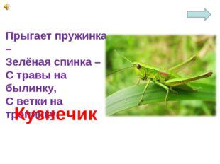 Прыгает пружинка – Зелёная спинка – С травы на былинку, С ветки на тропинку.