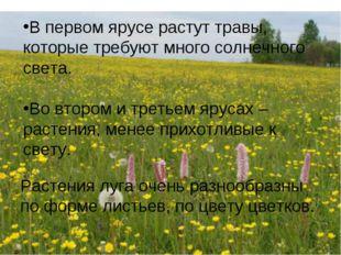 В первом ярусе растут травы, которые требуют много солнечного света. Во второ