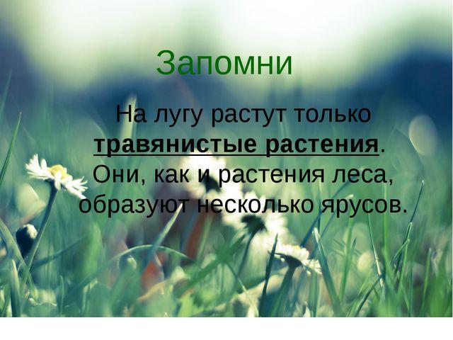 Запомни На лугу растут только травянистые растения. Они, как и растения леса,...