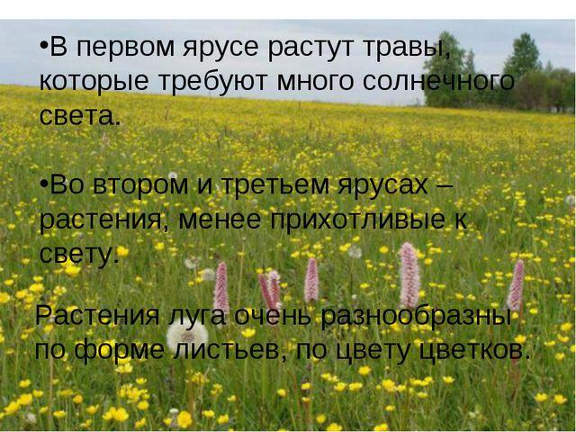 В первом ярусе растут травы, которые требуют много солнечного света. Во второ...