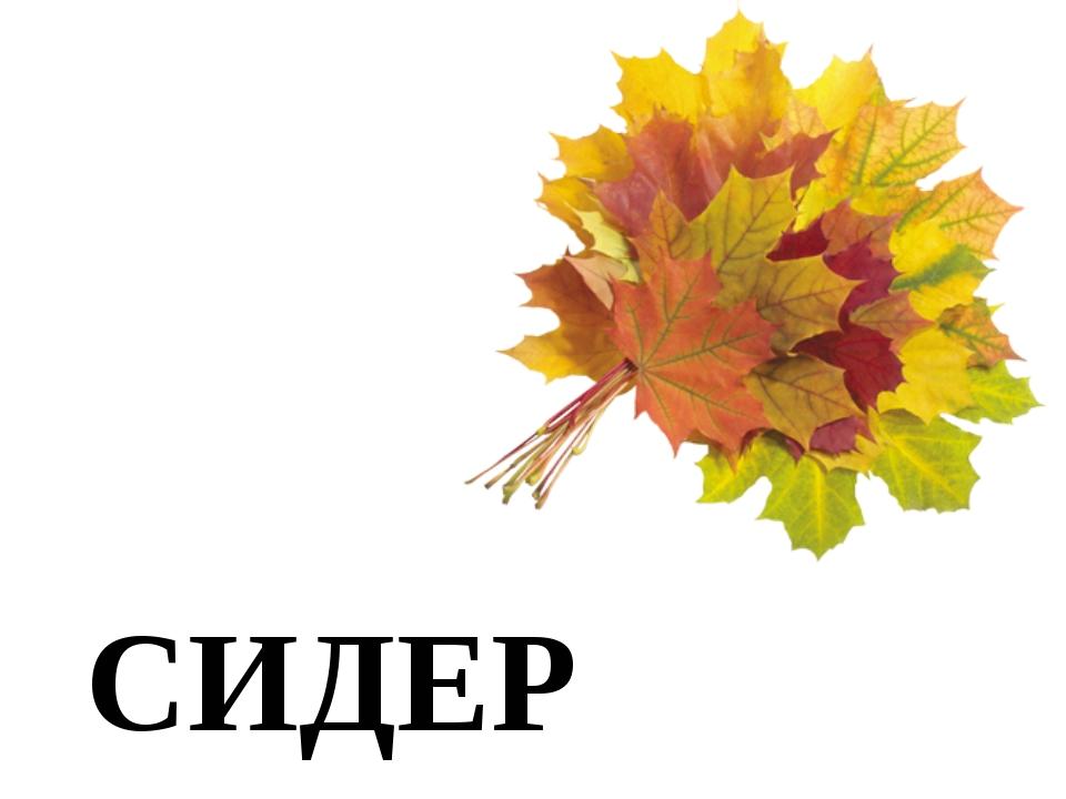 СИДЕР