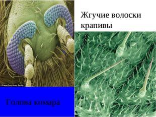 Голова комара Жгучие волоски крапивы