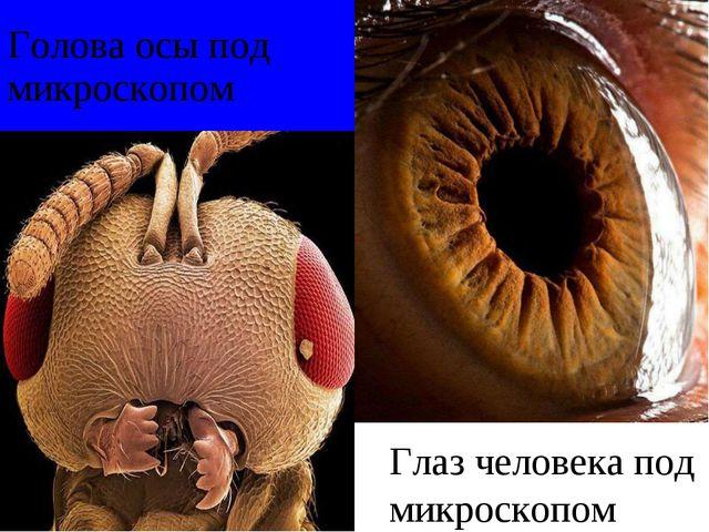 Голова осы под микроскопом Глаз человека под микроскопом