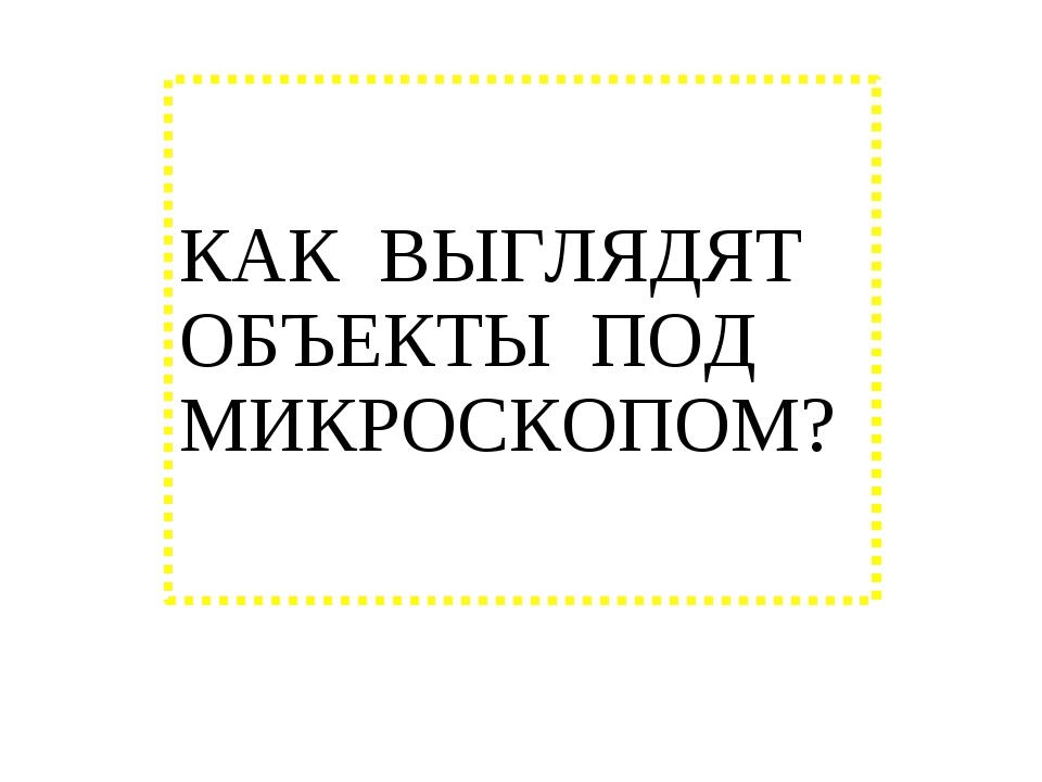КАК ВЫГЛЯДЯТ ОБЪЕКТЫ ПОД МИКРОСКОПОМ?