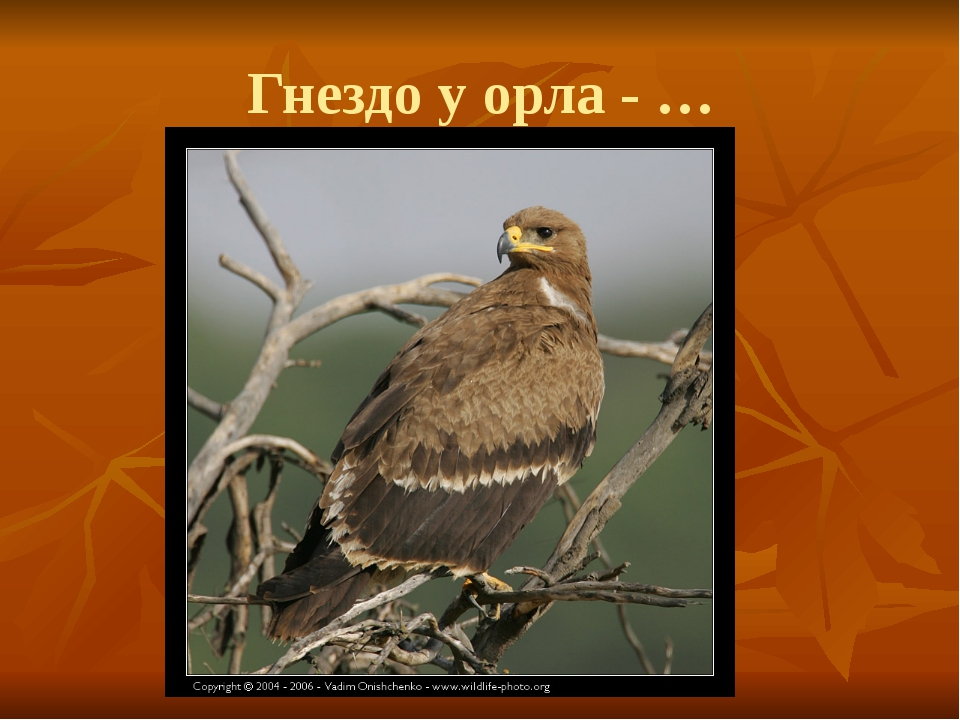 Гнездо у орла - …