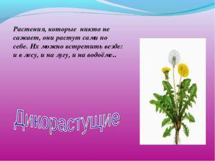 Растения, которые никто не сажает, они растут сами по себе. Их можно встретит